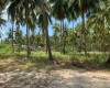Beach Land For Sale Laem Yai, Koh Samui (Thai-Real.com)